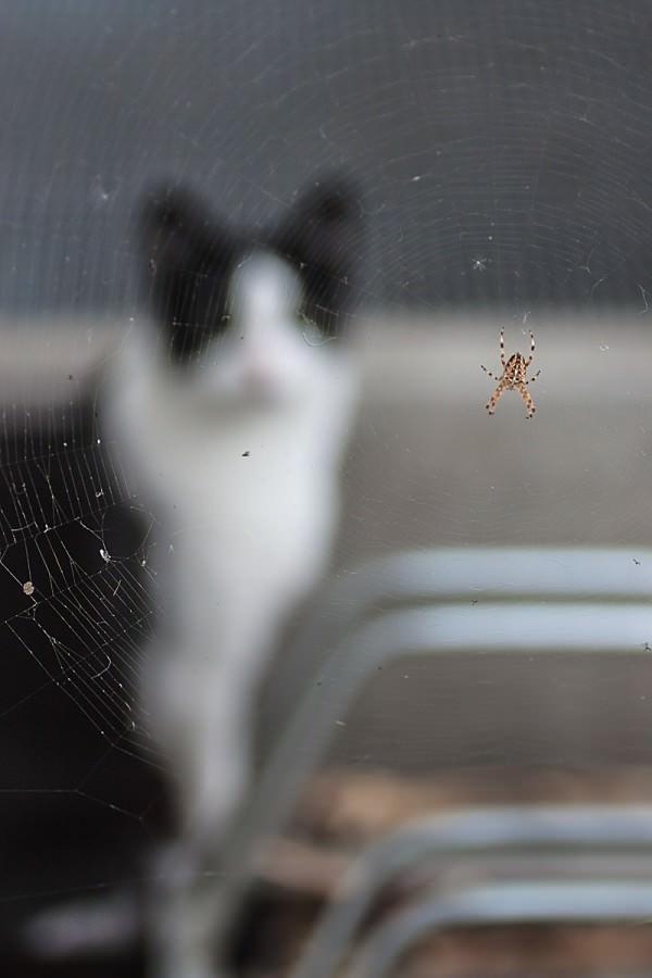 Katze schaut Spinne an