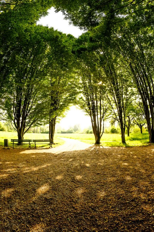 Schattenparken