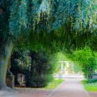 Hängebuche in der Grünanlage beim Fürther Stadtpark