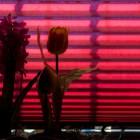 Wortspiel für die Frankophilen: <br />Blumenstilleben vor Eifersucht
