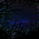 Auf der Erde liegen und durch das Gras ins Universum schauen
