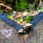 Ein Herz für Pilze