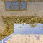 Blatt schwimmt über Schuh hinweg (aus der Serie: Vorspiegelung falscher Tatsachen)