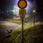 Hundehaarlicht