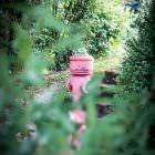 Der scheue rosa Hydrantling in seiner natürlichen Umgebung