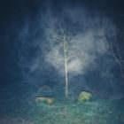 Nacht und (Doppel-)Nebel 3