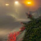 Nebel in den späten 19er und frühen 20er Jahren 09
