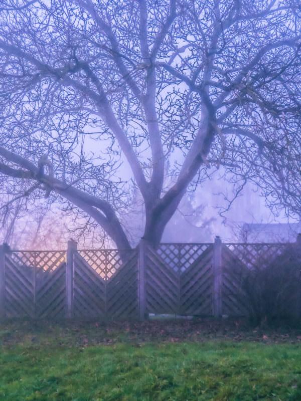 Nebel in den späten 19er und frühen 20er Jahren 19